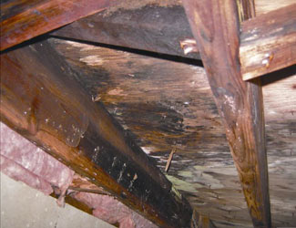 mold and rot in a Edison crawl space