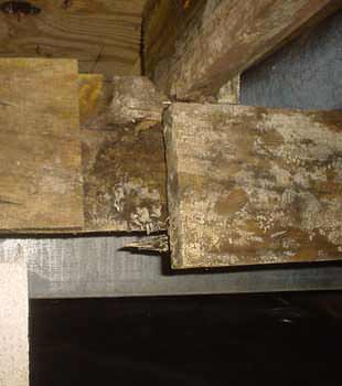 Extensive basement rot found in Jersey City by Quality 1st Basements